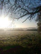 Early November Morning