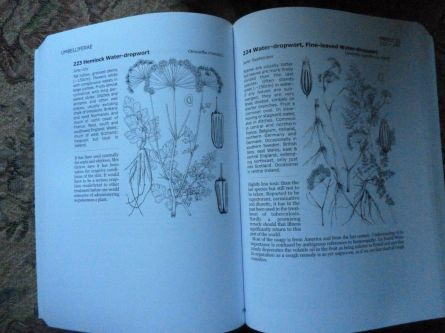 Lovely line drawings of dodgy umbelliferae...