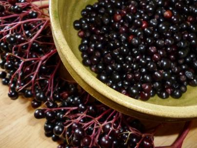 Elderberries - one of my favourite autumn fruits!