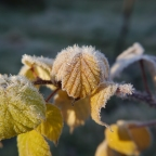 January in the Garden and Hedgerow