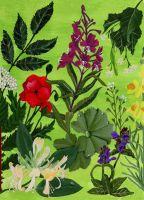 Wild Medicine – Summer BOOK ANNOUNCEMENT
